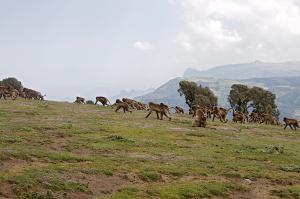 Trekking Tour In Ethiopia Packages